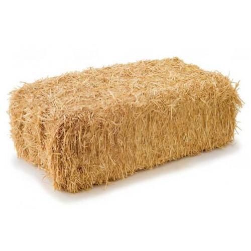 Аренда соломы в тюках пшеничной золотистой для декора